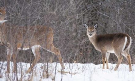 Weighing the Pros and Cons of Shooting a Doe With Fawns