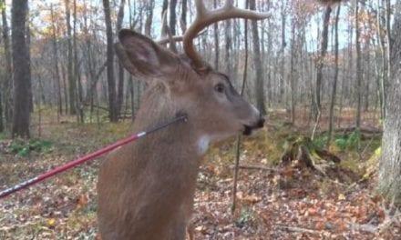 Whitetail Buck Walks Right Into Hunter's Arrow