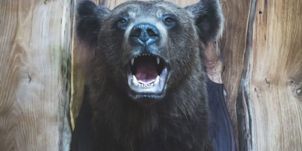 10 Most Famous Bear Hunters There Ever Were