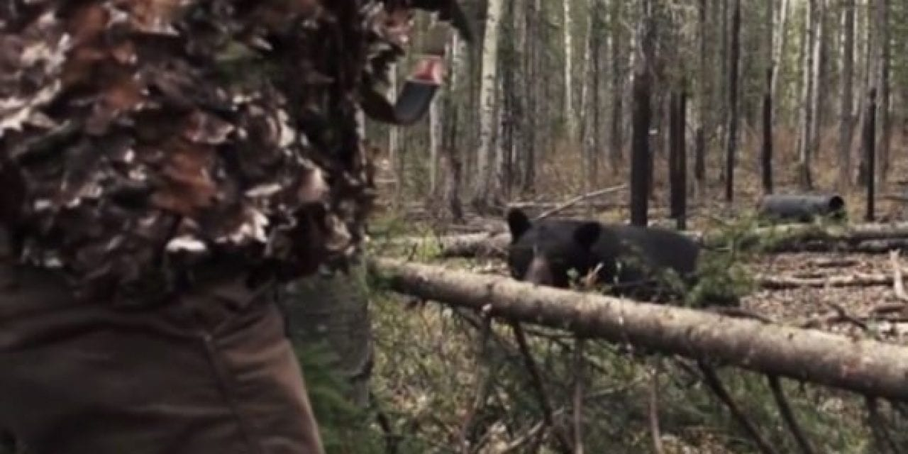 Black Bear Hunt Turns Dangerous, Hunter Takes the Shot From 3 Yards