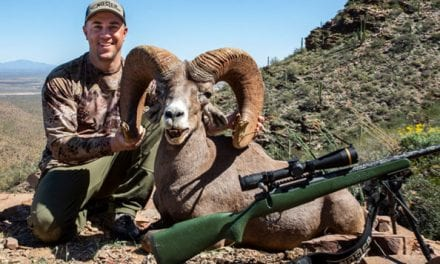 Four Sheep, Four Cartridges, One Nosler Complete North American Grand Slam