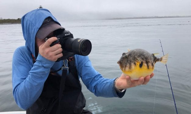Going crab-less for tautog