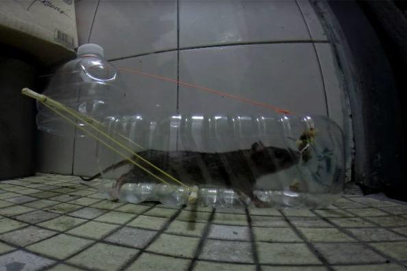DIY Mouse Traps