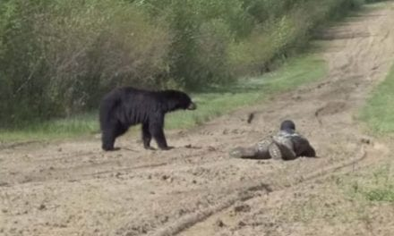 Black Bear Hunt Presents Wildly Close Encounter