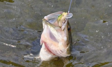How to Catch Fish When You're Getting Skunked Non-Stop