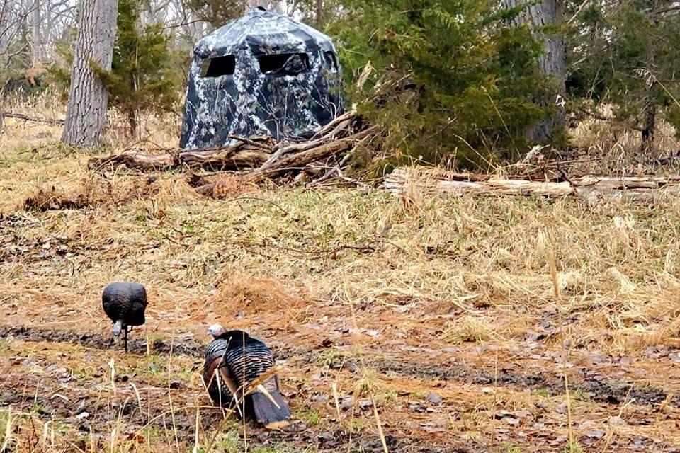 Hunting Turkeys in Foul Weather