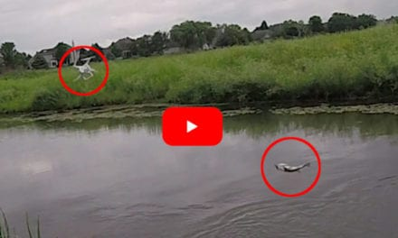 Largemouth Bass Causes Hilarious and Expensive Drone Fishing Mistake