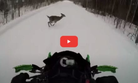 Snowmobile Collides With Running Deer