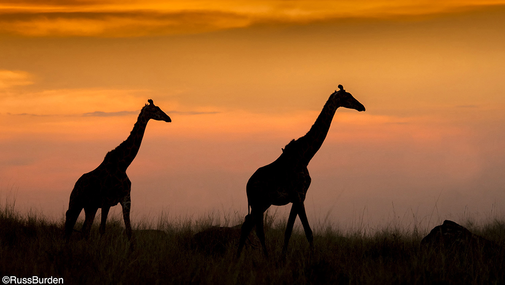 Photo safari tips