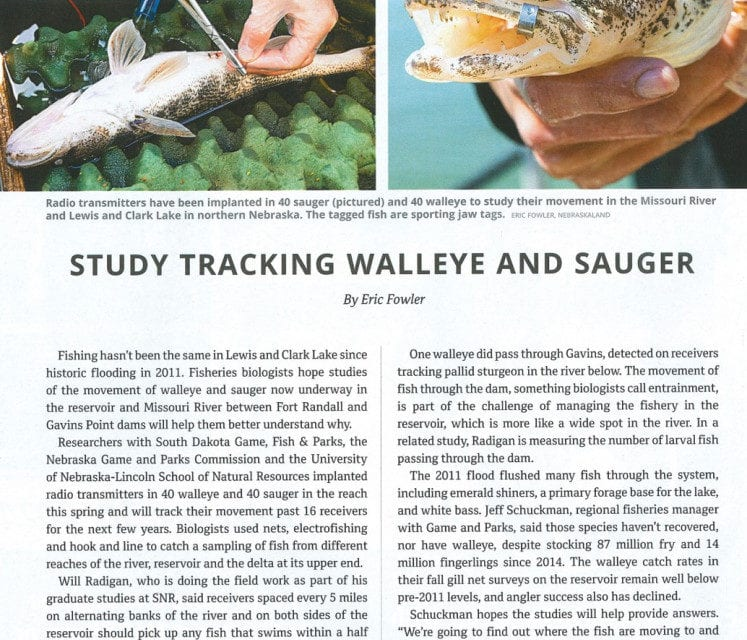 Missouri River Sauger and Walleye Tracking