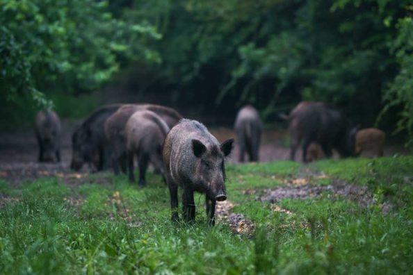 Alabama Night Hunting Permit
