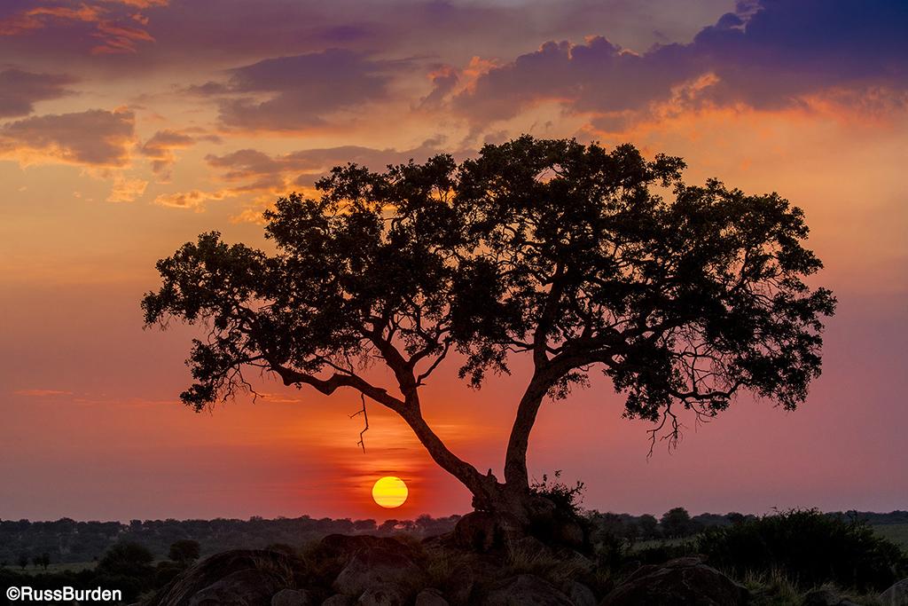 Serengeti tree and sun on the horizon line