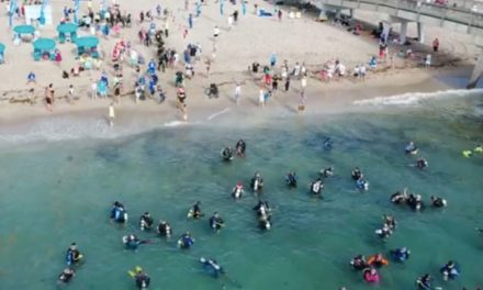 633 Divers Break World Record for Biggest Underwater Cleanup