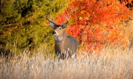 Kansas Hunting Seasons: All There is to Know and Check For Before You Go