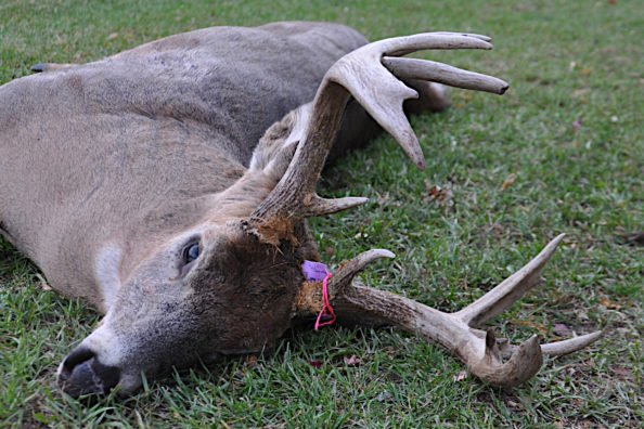 Michigan Deer Combo License Explained