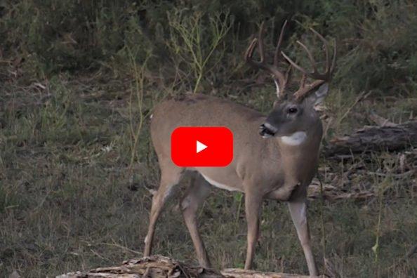 Oklahoma Muzzleloader Buck