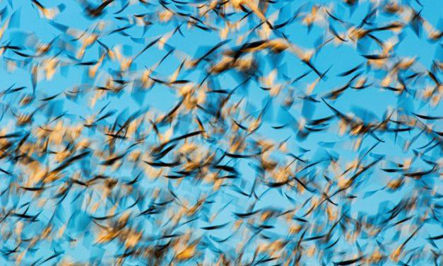 Motion Blur Assignment Winner Jemma Lee