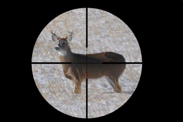 Deer Lung Shot